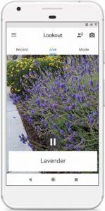 Imagen de la aplicación enfocando a unas lilas.