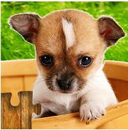 Logo de la aplicación Juego de Perros - puzzle para niños y adultos.