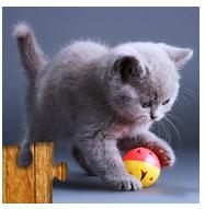 Logo de la aplicación juego de puzzles de gatos