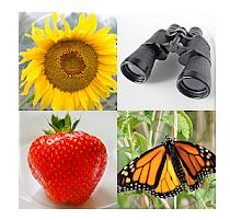 Logo de la aplicación imágenes y palabras fáciles: Fotos quiz con 5 temas.