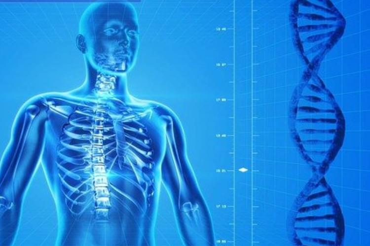Imagen de órganos internos y cadena de ADN
